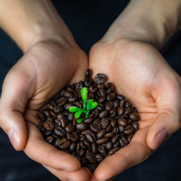 Fair Trade koffiebonen