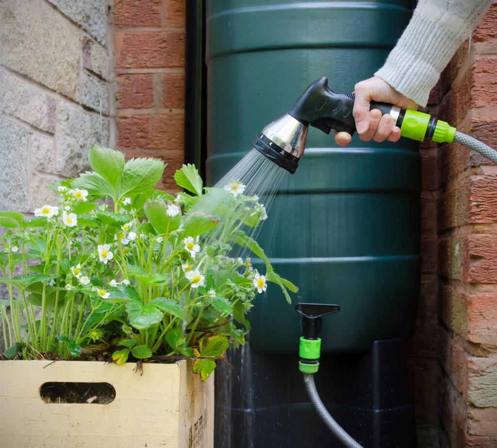 Planten water geven met water uit de regenton